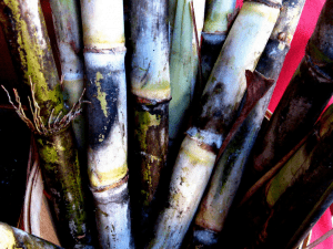 A History of Sugarcane